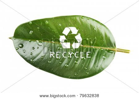 Recycle symbol on green leaf, recycling concept