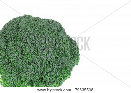 Broccoli vegetable close up. Place for text.