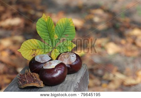 Conker And Leaf On Bench In Autumn Park