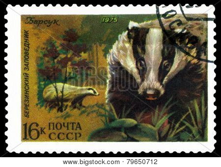 Vintage  Postage Stamp. Badger.