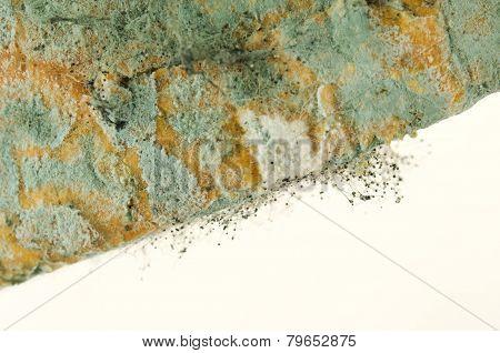 Bread Mold