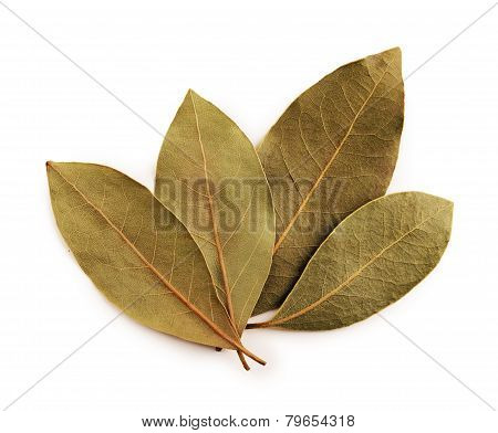 Bay leaves with clipping path
