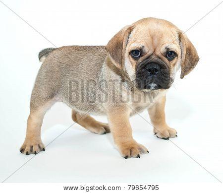 Mad Puppy!