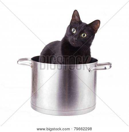 Humorous image of a black cat sitting in a large sauce pot, with a curious look on her face