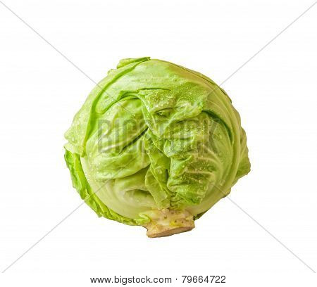 Headed Out Young Cabbage On A White Background Isolated