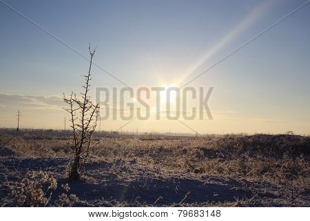 winter steppe