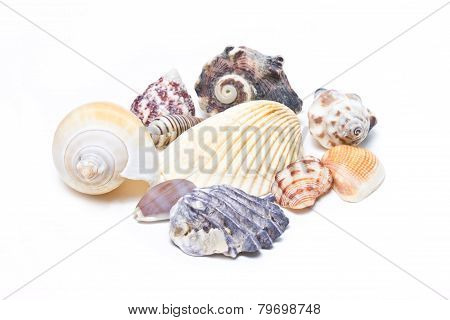 Variety Of Sea Shells Isolated On White.