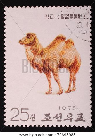 North Korea - 1975: Postal Stamp Printed In North Korea Shows An Image Of An Camel On A White Backgr