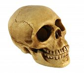 pic of casket  - Photo shows a Human skull Shaped Casket - JPG
