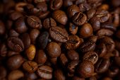 image of coffee coffee plant  - Coffee on grunge wooden background Fresh coffee beans on wood and linen bag ready to brew delicious coffee - JPG