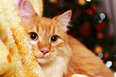 pic of lovable  - Lovable red cat on lights background - JPG