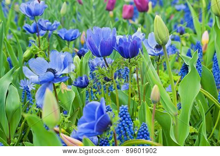 Blue anemone and other flowers