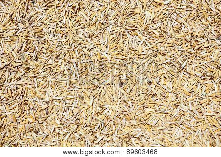 Rice Husk  On White Background