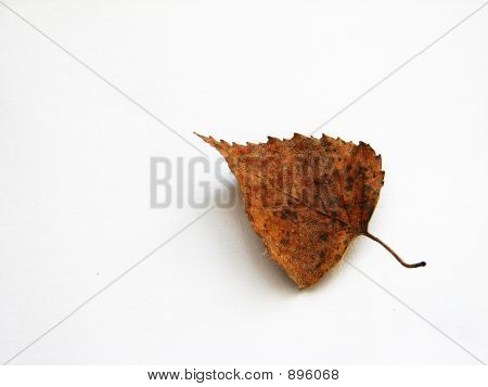 Loneliness Leaf
