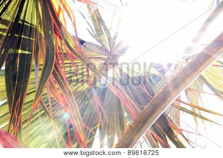 Branches of palm
