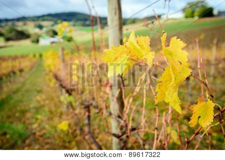 Autumn Wine Valley, South Australia