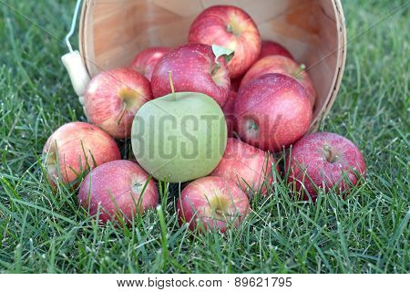 Sweet Gala Apple