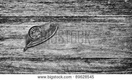 Snail On Red Leaf