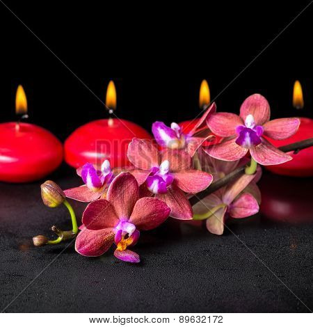 Beautiful Spa Concept Of Blooming Twig Red Orchid Flower, Phalaenopsis With Water Drops And Row Cand