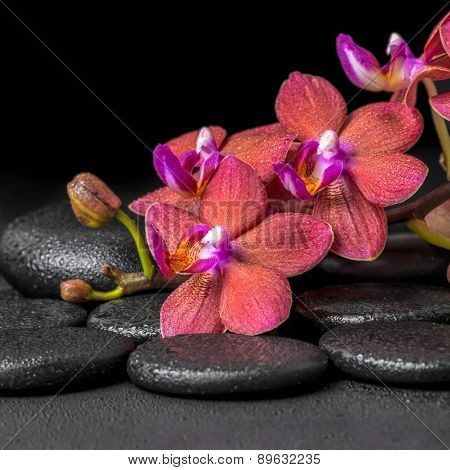 Beautiful Spa Composition Of Blooming Twig Red Orchid Flower, Phalaenopsis With Water Dew On Zen Bas