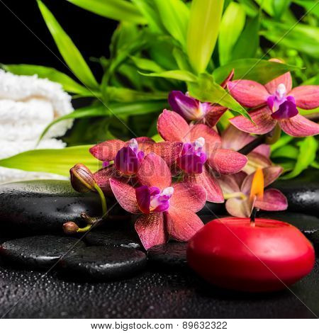 Spa Concept Of Blooming Twig Red Orchid Flower, Phalaenopsis, Bamboo With Dew, Towels And Candle On