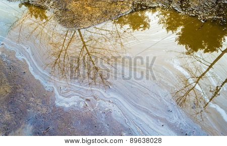 Oil Spill In Puddle With Tree Reflection