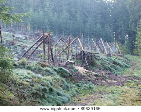 Reforestation, South Bohemia