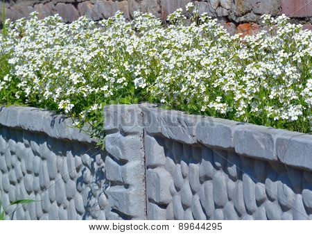 Pretty White Flowers Blooming
