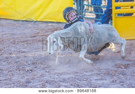 Mutton Busting