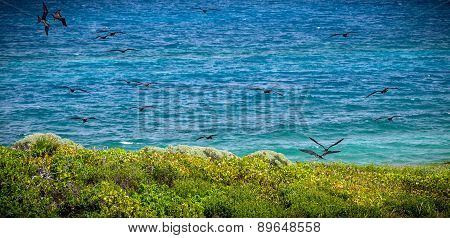 Isla Contoy Landscape And Frigate Birds, Mexico