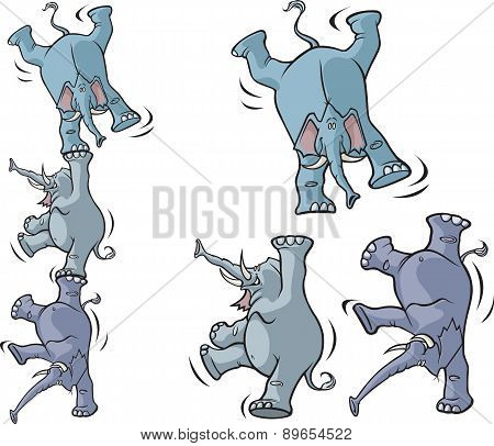 Acrobatic elephants