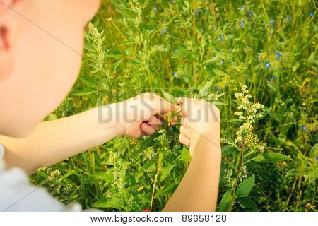 Child Playing On Meadow Examining Field Flowers