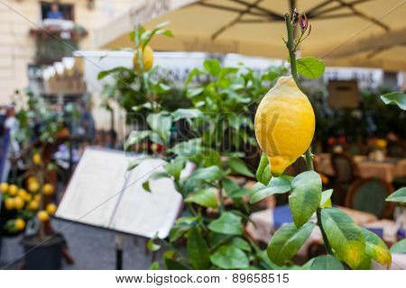 Close Up Of A Lemon Outside A Restaurant In Sorrento.