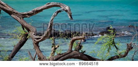 Dark Dry Wood Pieces In Front Of Gorgeous Turquoise Water Of Beach 69