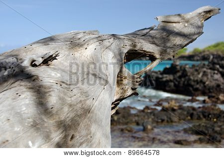 Massive Piece Of White Dry Wood Trunk At Beach 69