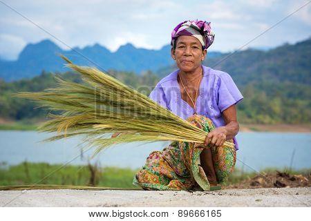 Sangkhlaburi, Kanchanaburi, Thailand - January  12, 2015:  An unidentified Mon ethnic woman separates seeds from rice plant on in harvesting season in Thailand