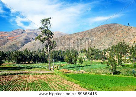 Lush Green Fields In Peru