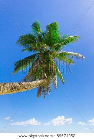 Coconut Wallpaper Coast