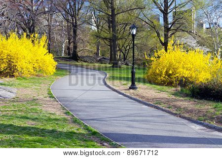 Path Through Central Park In New York