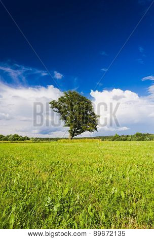 Field Landscape Grass Land
