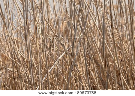 Full Frame shot of Tall Brown Grass