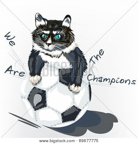 Cute Angry Kitty Tear Ball Football Background