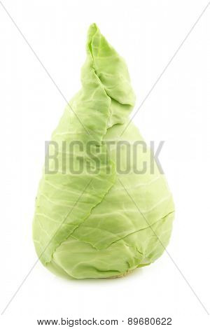 freshly  harvested green pointed cabbage on a white background