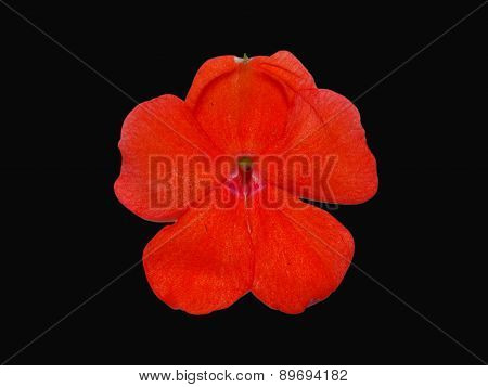 Orange Flower On Black