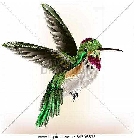 Beautiful Detailed  Hummingbird In Fly
