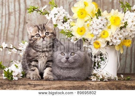 tvo kittens sitting in flowers