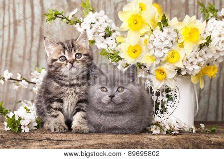 tvo kittens sitting in flowers
