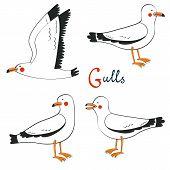 image of flock seagulls  - Elegant hand drawn seagulls collection - JPG