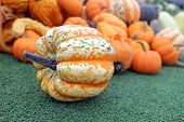 stock photo of gourds  - bumpy gourd and pumpkin display in the market place - JPG