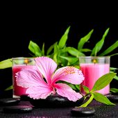 foto of hibiscus  - beautiful spa still life of pink hibiscus flower twig bamboo and pink candle on zen basalt stones with dew closeup - JPG